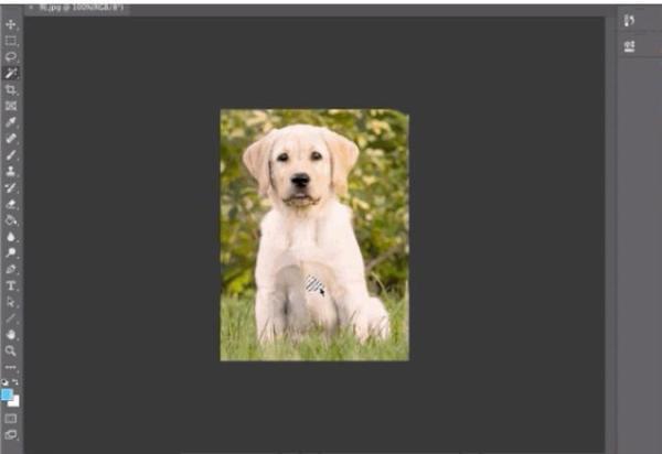 一键抠出细密发丝,这是Adobe最新的AI抠图算法,即将上线